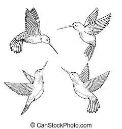 Set hummingbirds. Sketch pencil. Drawing by hand.