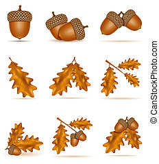 set icons autumn oak acorns with leaves vector illustration