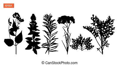 set, illustratie, silhouettes, vector, wilde bloemen