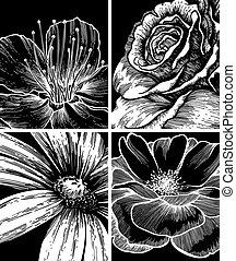 set, illustration., achtergronden, bloemen, vector, hand-drawing.