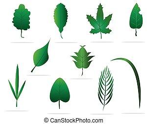set, illustration., elements., questo, foglie, vettore, verde, disegno, immagine