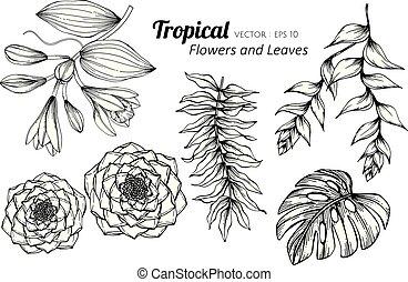 set, illustration., foglie, collezione, fiore tropicale, disegno