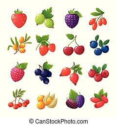 set, isolato, lamponi, berries., vettore, ciliegie, mirtilli, fondo, mirtilli, uva spina, bianco, fragole, cartone animato