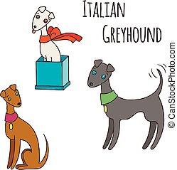 set., italienischer windhund, hund, karikatur