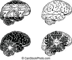 set, kleur, een, vier, hersenen, overzicht., elektronisch,...