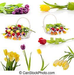 set, kleurrijke, tulpen, vrijstaand, flowers., achtergrond, lente, fris, witte