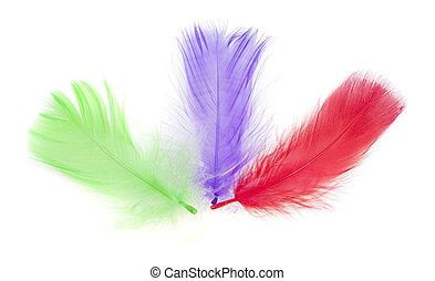 set, kleurrijke, vrijstaand, wite veer, vogel
