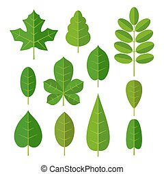 Set leaf. Vector flat color illustration. Isolated white background