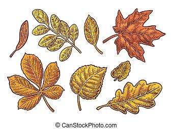 Set leaf. Vector vintage color engraved illustration.