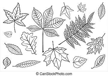 Set leaves of black on white. Vector illustration. EPS 10.