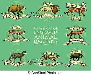 set, leone, tiger, bobcat, disegnato, vendemmia, volpe, tesserati magnetici, rosso, re, grande, leopardo, orso, mano, logos, animali, verro, lince, selvatico, lupo, emblemi, inciso, o