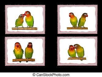 Lovebirds postage stamps