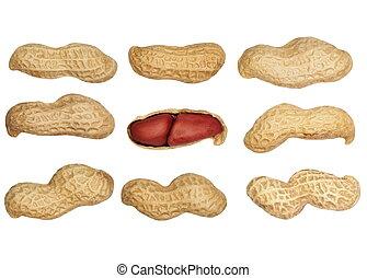 Set macro of peanuts isolated