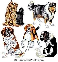 set, met, honden