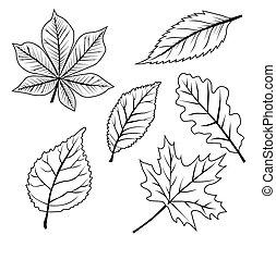 set, mette foglie