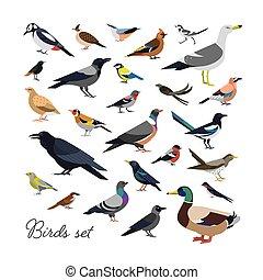 set, moderne, modieus, overzicht., vogels, stijl, stad,...