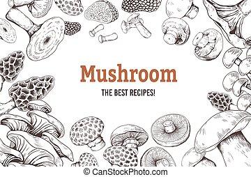 set, mushrooms., champignon, schizzo, fungo, tartufo, cibo, ostrica, fondo., organico, vettore, shiitake, scarabocchiare