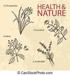set, natuur, -, illustratie, gezondheid, handdrawn