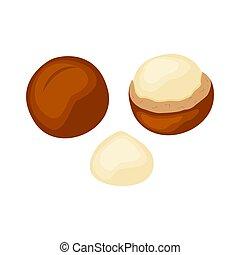 set, noci, isolato, illustrazione, fondo., vettore, mezzo, bianco, macadamia, intero