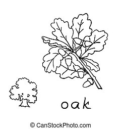 Set oak branches with leaves and acorns