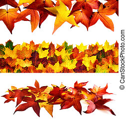 Set of 3 autumnal borders - Collage of 3 ornate autumn...