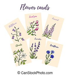 Set of 6 cards with color flowers