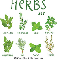 Set of 8 vector herbs