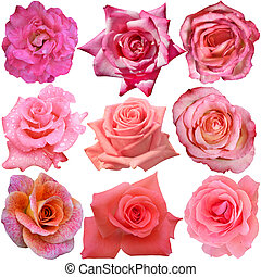 Set of 9 different roses