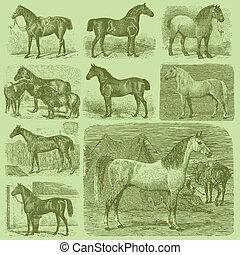 Set of 9 Vintage Engraved Horses