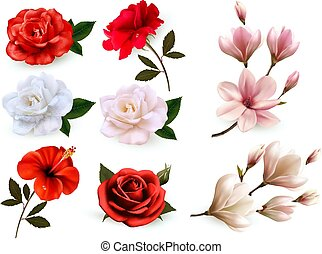 Set of a beautiful flowers isolated on a white background. Vector.