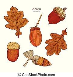 Set of acorn, hand draw sketch vector.