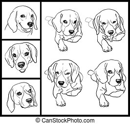 Beagle - Set of adorable Beagle on white background