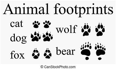 Set of animal  trails