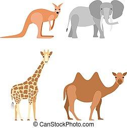 Set of animals: elephant, camel, giraffe, kangaroo, vector illustration