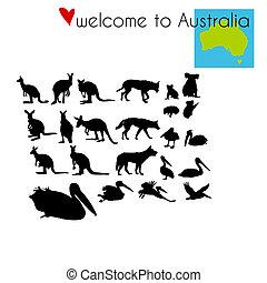 Set of animals in Australia