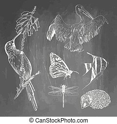 Set of animals on chalkboard background. Colibri, pelican, butterfly, fish, hedgehog, dragonfly sketches. Vector illustration isolated on blackboard imitation. Collection for school and printing.