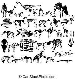 Set of animals skeletons