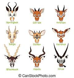 Set of antelope species