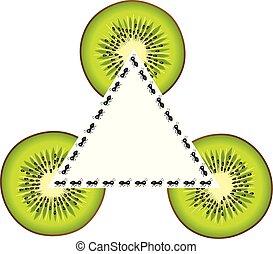Set of ants and kiwi slices shape triangle frame