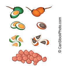 Set of Areca Nut Fruit on White Background