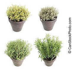 Set of aroma herbs