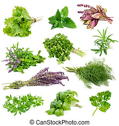 Set of aromatic herbs and spices