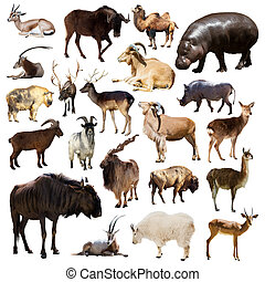 Set of Artiodactyla mammal animals on white