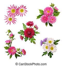 Set of aster flowers arrangements