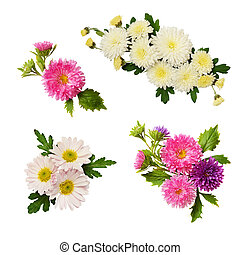 Set of aster flowers compositions