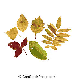 Set of autumn leaves for your design