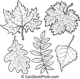 Set of autumn leaves - maple, aspen, oak and rowan