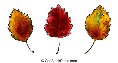 Set of autumn leaves on white background. Hand draw illustration