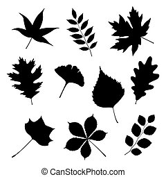 Set of autumn leaves on white background, vector illustration