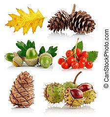 set of autumn nature elements isolated on white background
